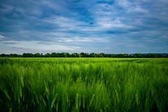 Grüne Idylle in Neuwied (maltehoch) Tags: grün idylle idyll bliss grass greenery blue sky meadow hdr wiese engerser feld engers germany deutschland