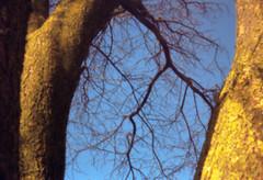 winter-tree (Pinhole Auloma) Tags: pinhole auloma attaphoto lensless sténopé estenopeica estenopo lochkamera nature winter sunlight landscape tree film 135 analog analogic kodak color colore