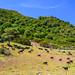 Road Trip through the West Coast of Sardinia