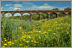 Tales from the Riverbank (david.hayes77) Tags: class56 grid 6z55 buttercups riverbank viaduct duttonviaduct cheshire freight dcrail wcml westcoastmainline actonbridge talesfromtheriverbank aggregate spring wildflowers 56103 riverweaver cargo dutton