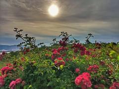 Hasta pronto solete ¿ (eitb.eus) Tags: eitbcom 36370 g1 tiemponaturaleza tiempon2019 bizkaia getxo pablomartinez
