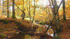 New Forest NP, Hampshire, UK (east med wanderer) Tags: england uk hampshire newforestnationalpark nationalpark stream water highlandwater beech oak lyndhurst