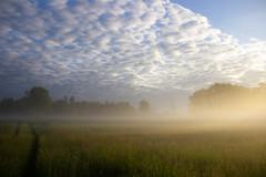 Dans la brume - in the mist (gopillentes) Tags: printemps paysage aube brume campagne spring landscape countryside mist dawn france sunrise matin morning clouds nuages sky ciel champs fields