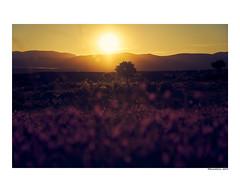 Primavera (david Ramalleira) Tags: sonya7iii sony24105f4 davidramalleira davidramalleiraphotography nature naturaleza natureart naturephotography naturesfinest naturesart natura landscape landscapes paisaje hiendelaencina guadalajara sunset atardecer