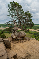 Gibraltar Tree (AChucksEyeView) Tags: wisconsin gibraltar tree nature landscape detail color rocks outdoor stack focus canon eosr rf24105