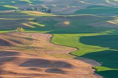 The Palouse, Washington (Linda JP) Tags: washington fields crops rollinghills palouse steptoe steptoebutte thepalouse tuscanyofamerica