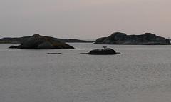 fotö (helena.e) Tags: helenae motorhome husbil rv älsa fotö water vatten klippor cliff cliffs sunset solnedgång ålakråka skarv bird fågel