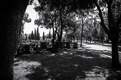 Loss (francoislinde) Tags: path remembering eerie people tiff grave depression highkey horror centurion grieving monochrome southafrica death past grass shadow loss plants street spirit road tree lifetime tragedy mourning cemetery fear surreal nostalgia spiritual contrast landscape sad remembrance somber tombstone dead outdoors 2019 feelings blackandwhite creepy dying