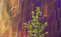 Lentegroen (Pieter Musterd) Tags: tree sportcampus zuiderpark pietermusterd musterd canon pmusterdziggonl nederland holland nl canon5dmarkii canon5d denhaag 'sgravenhage thehague lahaye
