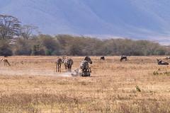 Ngorongoro, Tanzania (Amdelsur) Tags: zebredeburchell tanzanie phacochèrecommun continentsetpays caldeiradungorongoro afrique africa cebra commonwarthog equusburchellii equusquagga ngorongorocaldera phacochoerusafricanus pundamilia tz tza tanzania zebra zèbredesplaines régiondarusha