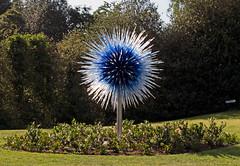Sapphire Star 2010 (Russtafa) Tags: dalechihuly kew gardens glass sculpture sculptor