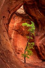 Gaia's Heart (zpeckler) Tags: arizona sandstone desert canyon redrocks reflectedlight