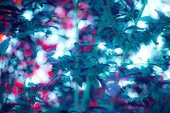 (kuuan) Tags: manualfocus mf minolta rokkor mrokkorf490mm mrokkor f4 90mm leica f490mm 490 colorful highlights lightroom colors