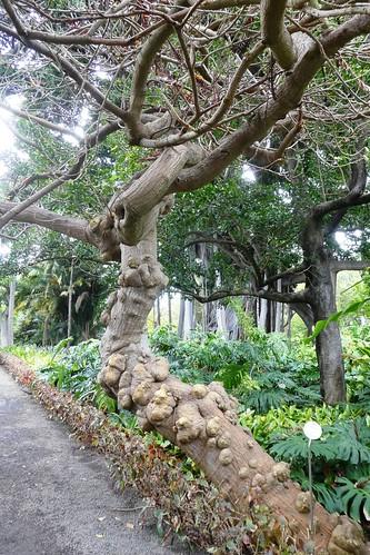 Botanical Garden Puerto De La Cruz