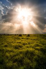 Baluran National park, Indonesia (pas le matin) Tags: travel voyage world baluran nationalpark balurannationalpark canon 7d canon7d canoneos7d eos7d indonésie indonesia java asia southeastasia sun soleil sunset coucherdesoleil prairie grass grassland herbe beams rayons clouds nuages blue bleu