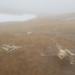 Caribou bones in the fog. Adak Island, Alaska