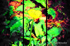 Buttercup (macro) (Stephenie DeKouadio) Tags: art artistic abstract abstractart abstractflower abstractflowers macroabstract yellow darkandlight flowersabstract flowerabstract colorful beautiful beauty