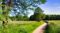 Junilandschaft 😀 München Lochhausen (Chridage) Tags: baum bäume lochhausen münchen munich bayern landstrase gras feld park himmel jahreszeiten seasons