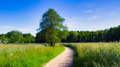 Junilandschaft 😀 München Lochhausen 2 (Chridage) Tags: baum bäume lochhausen münchen munich bayern landstrase gras feld park himmel jahreszeiten seasons