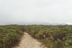Ilha do Cardoso (Lucas Marcomini) Tags: filmphotography analog 35mm landscape nature film filmisnotdead travel wanderlust adventure outdoors outside buyfilmnotmegapixels 35mmfilm ishootfilm grainisgood portra 800 paradise island lost beautifuldestinations lonelyplanet rawpix tropical beach brazil brasil ilhadocardoso