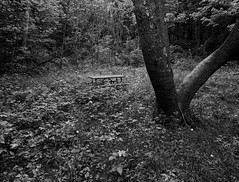 Overgrown (mswan777) Tags: park grass weed tree forest wood outdoor nature scenic plant picnic table leaf growth apple iphone iphoneography mobile monochrome ansel black white michigan