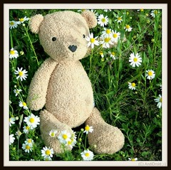 """Wer keinen Wunsch hat, ist dem Glück bereits ziemlich nahe."" Tabindranath Tagore / Foto Alle Rechte vorbehalten © AndiDroid ;-)     ...HTBT (AndiDroid ;-)) Tags: andidroid foto photo photography photographie blumen blume flowers flower spring springtime findbearfindbär teddy bears happyteddybeartuesday htbt"