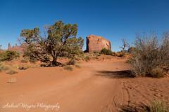 Morning drive in Monument Valley, Arizona (Andrea Meyers) Tags: 2018 organrockshale sunrise mesas theviewhotel dechellysandstone navajotriballands arizona monumentvalley cutlerformation june25 sandstone