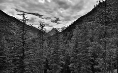 Agnes Mountain and Other Peaks of the Ptarmigan Crest (Black & White, North Cascades National Park Service Complex) (thor_mark ) Tags: agnesmountain azimuth231 blackwhite bluesskieswithclouds capturenx2edited cascaderange centralnorthcascades colorefexpro day5 evergreentrees evergreens hiketohowardlake hillsideoftrees junctionmountain lakechelannationalrecreationarea landscape lookingsw mountainpeak mountains mountainsindistance mountainsoffindistance mountainside nature nikond800e northcascades northcascadesnationalparkcomplex northcascadesnationalparkservicecomplex outside pacificcresttrail pacificranges partlycloudy project365 ptarmigancrest rollinghillsides silverefexpro2 snowonfaroffmountainpeaks snowcapped sunny talltrees trees triptonorthcascadesandwashington lakechelannationalrecreation washington unitedstates