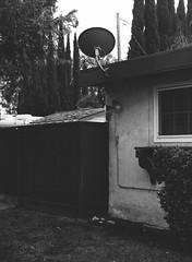 San Jose, California (bior) Tags: pentax645nii 6x45cm pentax645 ilfordfilm hp5plus hp5 ilfordhp5plus 75mm sanjose california satellitedish house yard fence suburbs residential