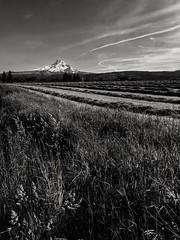 Mt Hood - monochrome (BorrowedLightPhoto) Tags: mounthood oregon monochrome googlepixel cellphonephotography
