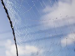 SPIDERWEB IN THE SKY (Pedro Muñoz Sánchez) Tags: telaraña spiderweb macro macrofotografia nature colors drops drop gotas gota