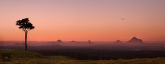 At Peace (Artistry & Love) Tags: mystical ethereal spiritual spirit magic heavenly celestial mysterious landscape nature fineart scene scenery view vista australia aus downunder maleny glasshousemountains onetree onetreehill dawn sunrise sepai red bird