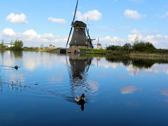 DSCN0881 (alainazer2) Tags: kinderdijk nederland paysbas holland hollande moulin mulino windmill eau acqua water ciel cielo sky champs fields colori colors couleurs animal