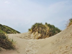 in the dunes (Peter Schüler) Tags: peterpe1 flickr dänemark dünen dunes