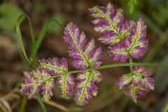 Wildflower (PJB32) Tags: wildflower nature flora undergrowth foliage