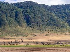 Ngorongoro landscape, Tanzania (Amdelsur) Tags: continentsetpays tanzanie caldeiradungorongoro afrique africa ngorongorocaldera tz tza tanzania régiondarusha