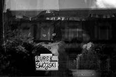 Żurek swojski / Homemade sour soup - Chorzów 2019 (Tu i tam fotografia) Tags: flowers blackandwhite bw blancoynegro window glass monochrome animal cat reflections noir noiretblanc streetphotography poland polska advertisement flowerpot streetphoto kot biancoenero biel okno kwiatki soursoup napis enblancoynegro czarnobiałe zwierzę czerń doniczka inbiancoenero odbicia szyba żurek fotografiauliczna czerńibiel inscription reklama ogłoszenie