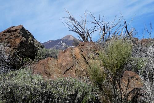 Bus Trip To Mount Teide