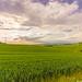 Rural panorama.