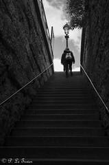 les déambulations photographiques d'un promeneur solitaire Square du Vert Galant-0187 (letexierpatrick) Tags: noiretblanc noirblanc noir black blanc white bw blackandwhite monochrome paris seine street escalier france europe extérieur explore nikon nikond7000 cofo66nico cof066dmnq cof066john cof066cott