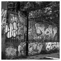Street View (CYCYPICS) Tags: hasselblad500 hasselblad analogicphotography argentique filmsisnotdead film120 formatcarré streetart streetview graph noiretblanc blackandwhite