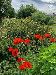 The Walled Garden in June (Roantrum) Tags: bedfordshire lutonhoowalledgarden roantrum luton england unitedkingdom