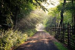 Wildpark (janeway1973) Tags: hessen deutschland germany büdingen wald forest bäume trees nature natur lichtstrahlen light rays gegenlicht backlighting