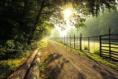 Wildpark (janeway1973) Tags: hessen deutschland germany büdingen wald forest bäume trees nature natur