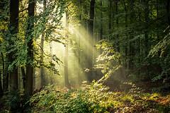 Wildpark (janeway1973) Tags: hessen deutschland germany büdingen lichtstrahlen light rays gegenlicht backlighting