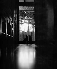 Sister sister (isadora.jpg) Tags: 120 film medium format 6x7 mamiya rb67 fomapan 100 kittens cats door window black white