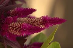 IMG_7154 (Lightcatcher66) Tags: baltrum 2018 flora lightcatcher66