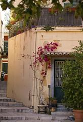 Through the door or up the stairs? (dramadiva1) Tags: corfu backstreet steps doorway cat bougainvillea plants