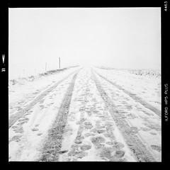Fog & snow (Into the white) (vincent-photo) Tags: analog blackwhite bw caffenol caffenolch film hp5 ilford mediumformat tlr twinlensreflex 6x6 yashica yashicaffenol yashica12