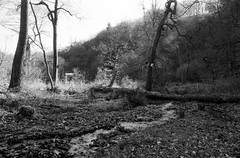 In the woods (Richie Rue) Tags: minolta dynax foma fomafomapan200 promicrol monochrome blackandwhite landscapes intimatelandscape film analogue ishootfilm istillshootfilm filmsnotdead woods trees hardcastlecrags nationaltrust outdoors yorkshire countryside northern